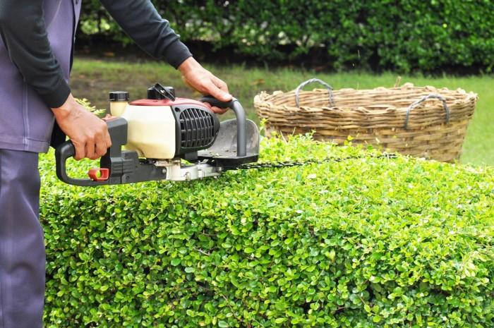お庭管理の極意~剪定の重要な役割~